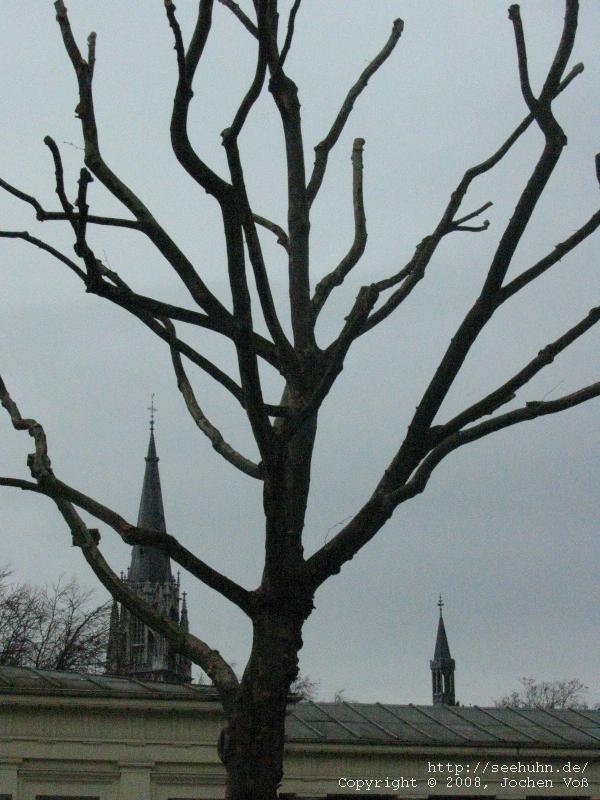 [sparse tree]