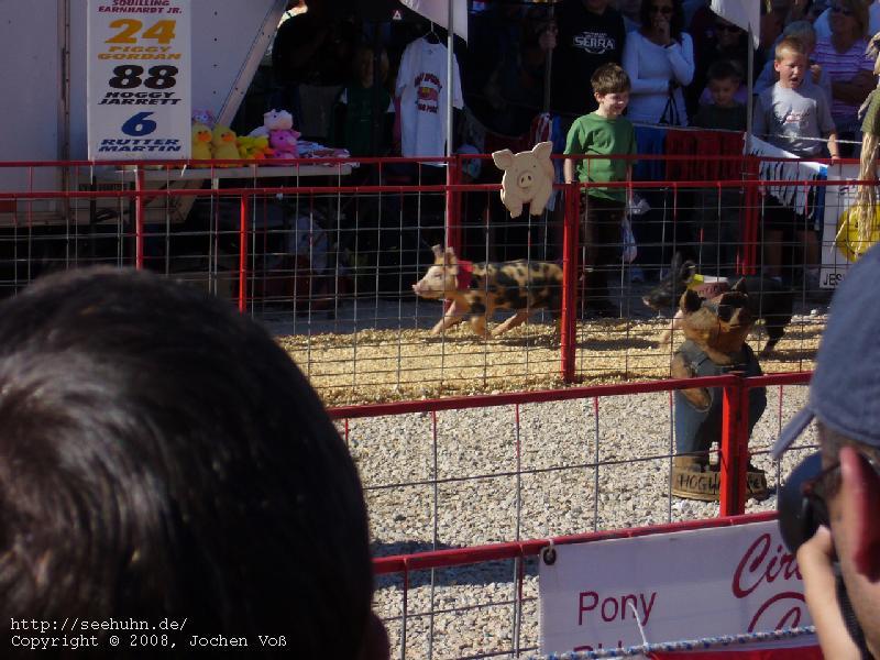 [pig racing]